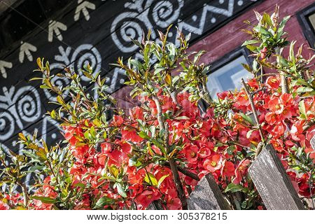 Painted Folk House With Red Flowers, Cicmany Village, Slovak Republic. Architectural Theme. Travel D