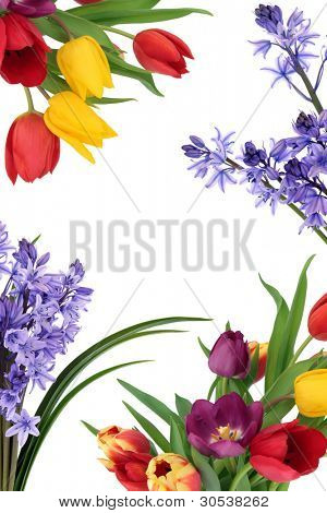 Tulip and bluebell flower spring border isolated over white background.