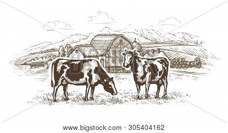 Dairy Farm. Cows Graze In The Meadow. Rural Landscape, Village Vintage Sketch