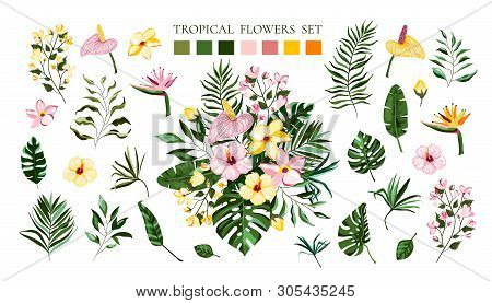 Set Of Tropical Exotic Flowers Frangipani Hibiscus Calla Green Monstera Palm Leaves. Floral Bouquets