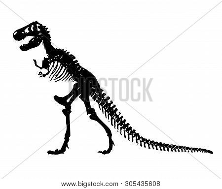 Vector Dinosaur Skeleton Mockup Closeup Isolated. Ancient Animal Dinosaur - Animal Anatomy