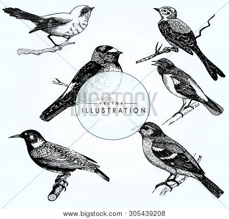 A Great Set Of Realistic Bird Sketches. Vector Bird Close-up. Beautiful Birds On A Branch