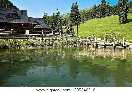 Pond Full Of Fish And Surroundings Of The Entrance To Cutkovska Valley Near Ruzomberok.