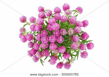 Flower Of A Red Clover Clover With Leaves And A Stem Close-up Isolated On A White Background. Top Vi