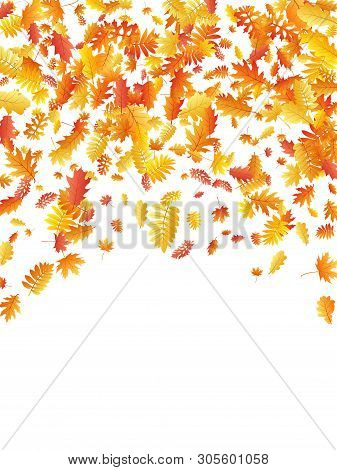 Oak, Maple, Wild Ash Rowan Leaves Vector, Autumn Foliage On White Background. Red Orange Yellow Wild
