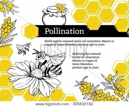 Pollination Hand Drawn Vector Illustration. Bumblebee And Blossom Flower Ink Pen Sketch. Honey Shop