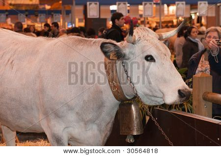 Paris - February 26: Mascot Cow Of The Show At The Paris International Agricultural Show 2012 On Feb