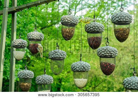 Planty Of Hanging Bird Feeders In Shape Of Acorn  Full Of Different Grain Against Forest Background