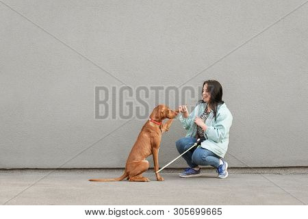 Happy Girl In Casual Clothing Trains A Dog, Background Of Gray Walls, Dog Gives A Foot. Smiling Woma