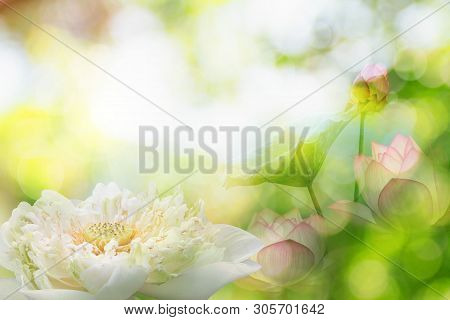 Double Exposure Of The Lotus Flower Or Water Lily And Face Of Buddha Statue. Buddhism Is Popular In