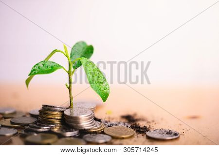 Young Plant Grow And Coins Stack, Pension Fund, 401k, Passive Income, Investment And Retirement Conc