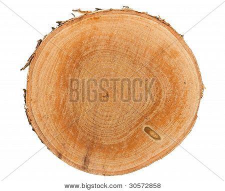Tree Stump Draufsicht