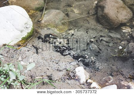 A School Of Tadpoles Grouping In Shallow Water