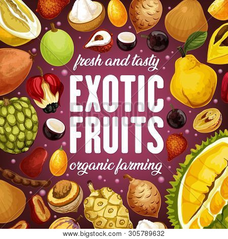 Exotic Fruits Harvest Of Durian, Tamarind And Cherimoya, Ackee Apple And Quince Pear. Vector Juicy C