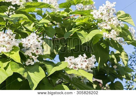 Natural Floral Tropical Exotic Botanical Background With Flowers. Gardening, Plants, Wood. Branches,