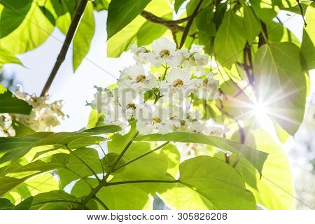 Natural Floral Tropical Exotic Botanical Background With Flowers. Gardening, Tree. Summer Heat. Bran