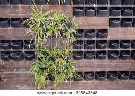 Flower Pots In The Wall, Indoor Plants In Pots On The Street.