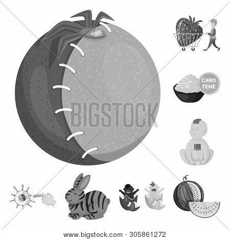 Vector Illustration Of Transgenic And Organic Icon. Set Of Transgenic And Synthetic Vector Icon For