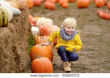 Little Boy On A Tour Of A Pumpkin Farm At Autumn. Child Sitting Near Giant Pumpkin. Pumpkin Is Tradi
