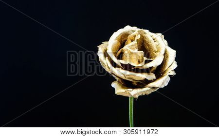 Botany Concept. Beautiful Silver Flowers. Floral Shop. Metallic Steel Or Golden Color. Metal Flowers