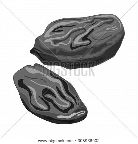Isolated Object Of Raisin And Dry  Symbol. Set Of Raisin And Heap  Vector Icon For Stock.