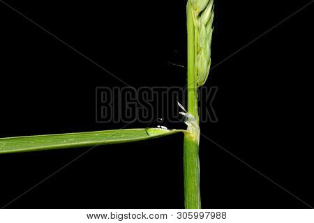 Grass blade with single water drop