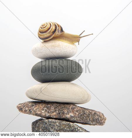 Helix Pomatia. Snail On Top Of A Stone Pyramid. Mollusc And Invertebrate. Delicacy Meat And Gourmet