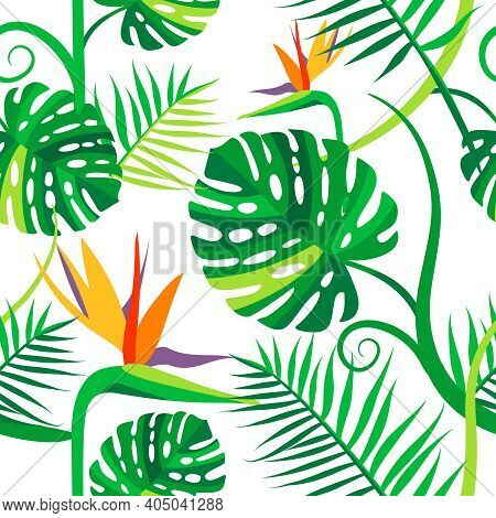 Seamless Vector Pattern With Tropical Flowers And Leaves. Green Monstera, Strelitzia Flowers On A Wh