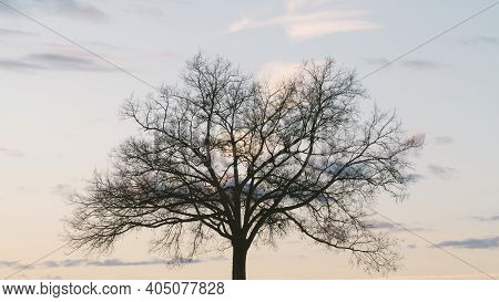 Silhouette Of Large Oak Tree Alone In Winter With A Beautiful, Colorful Sunset In The Background.