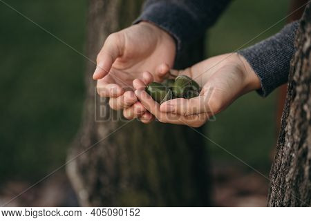The Girl Holds Green Acorns In Her Hands. Close Up Shot Of Hands With Acorns