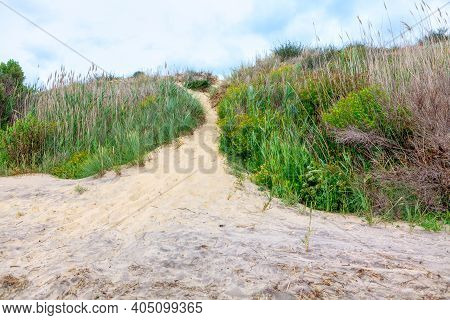 Sandy Dune With Grass . Uncultivated Vegetation On The Beach