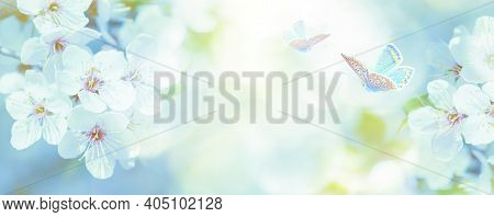 Beautiful Blossoming Cherry Tree, Butterfly On Light Blue Sky Background In Sunlight, Shallow Depth.