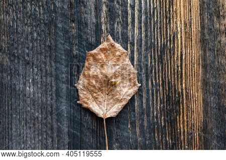 Close Up Of A Fallen Autumn Leaf With A Little Insect On Top, Resting On A Dark Brown Wooden Surface