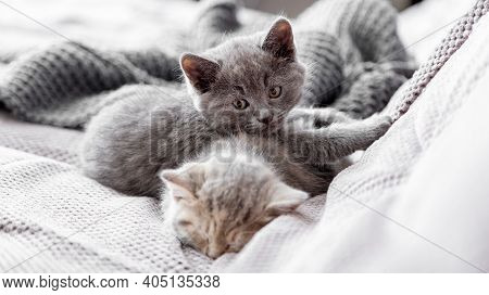 Gray And Tabby Adorable Cats Are Resting At Cozy Home Interior. Couple Fluffy Kittens Lie Sleep On G