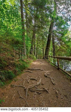 Trail Through Forest In Summertime. Trees An Fence Along The Path. Roots Stick From The Ground. Natu