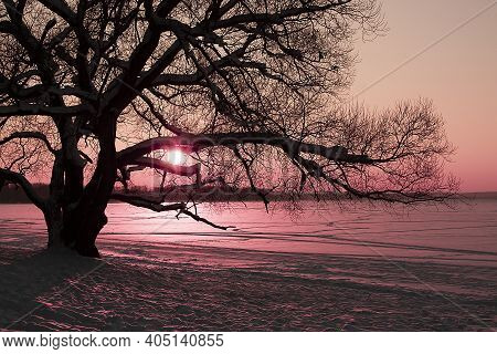 Horizontal Landscape Photo Of A Dreamlike Pink Sunset In The Park With A Silhouette Of A Big Tree An