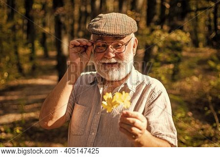 Explore World Around. Pensioner Hiking In Forest On Sunny Autumn Day. Botanist Examine Herbs. Old Ma