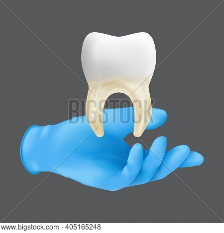 Dentist Hand Wearing Blue Protective Surgical Glove Holding A Ceramic Model Of The Tooth. 3d Realist