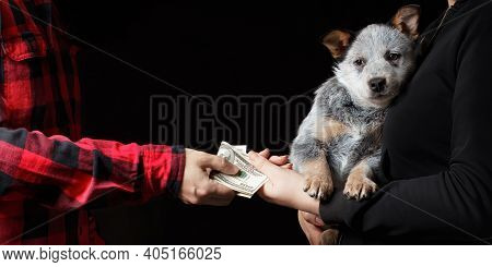 Selling Of A Dog Puppy For Cash Dollars. Finding Or Losing A Friend. Dog Breeder Business. Black Bac