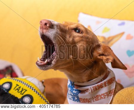 Beautiful Dog With Funny Face Playing And Posing