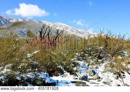 Chaparral Shrubs Surrounded By Snow With Rural Mountains Beyond Taken On Arid Badlands At The High D