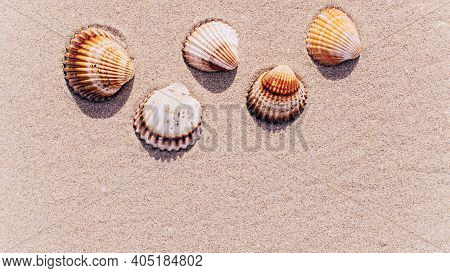 Shells Background With Seashells, Shells On Sand Tropical Sea Beach. Travel Concept In Minimal Style