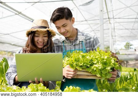 Hydroponics, Two Asian Farmers Own A Vegetable Farm, Use A Laptop To Monitor Temperature Control, An