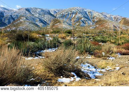 Chaparral Plants Surrounded By Snow With Rugged Mountains Beyond Taken On Arid Badlands At The Mojav