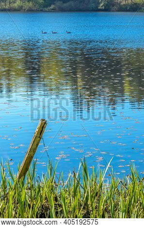 View at Small Pond in the Park with Wildlife in British Columbia, Canada.