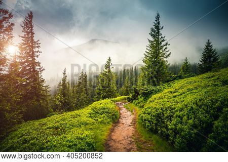 Fabulous and mysterious path in the coniferous foggy forest. Location place of Carpathians mountain, Ukraine, Europe. Image of exotic scene. Vibrant photo wallpapers. Discover the beauty of earth.