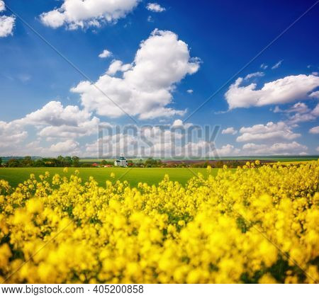 Bright yellow rapeseed field and cultivated land on a sunny day. Location place of Ukraine agricultural region, Europe. Ecology concept. Agrarian industry. Vibrant photo wallpaper. Beauty of earth.