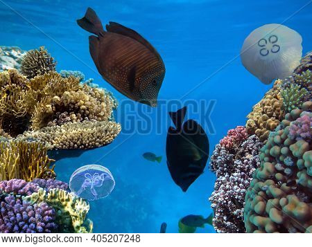 Colorful Coral Reef With Hard Corals At The Bottom Of Tropical Sea. Red Sea