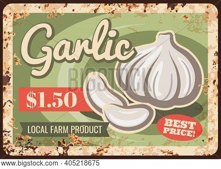 Organic Farm Garlic Harvest Rusty Metal Plate. Local Farm Product, Natural Food Market Or Shop Retro