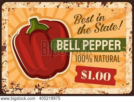 Bell Pepper Farm Rusty Metal Vector Plate. Sweet Bell Pepper Red Fruit. Natural Food, Vegetables Org